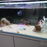 鳥取市栄町にコモドまちなか水族館がオープン 情報をまとめてみました!
